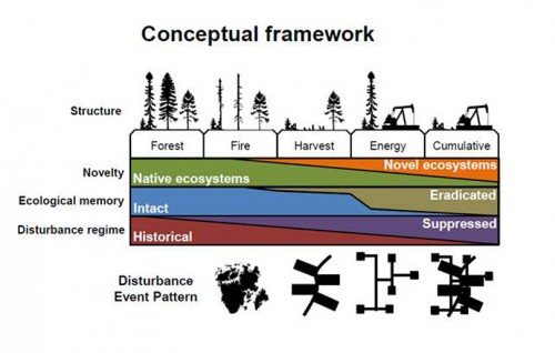 Comparing Cultural to Natural Disturbance Patterns